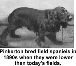 Pinkerton bred field spaniels and yorkies.