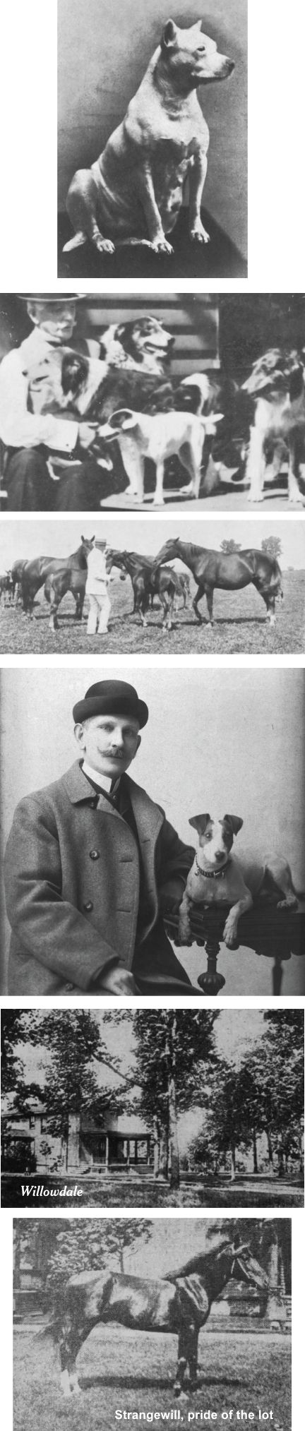 Will Davis and his dogs and horses
